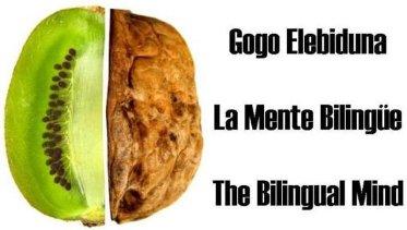 La riquesa de les llengües, 15: el cervell dels bilingües